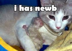 I has newb